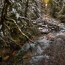 Upper Soda Creek ~ Snow ~ by Charles & Patricia   Harkins ~ Picture Oregon
