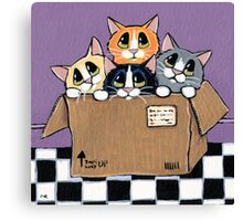 Mail Order Kittens Canvas Print