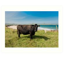 Kerry Cow Art Print