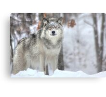 ...when a wolf cross your path ... ( see Large !! ) Metal Print