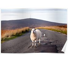 Sheep, Wicklow/Dublin Mountains Poster