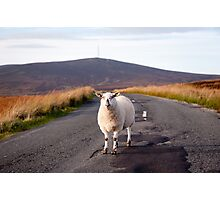Sheep, Wicklow/Dublin Mountains Photographic Print