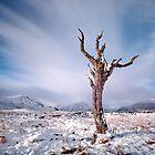 Rannoch moor tree by Grant Glendinning