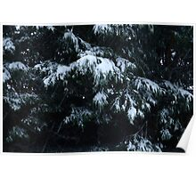 Snowy Evergreen Close-Up Poster