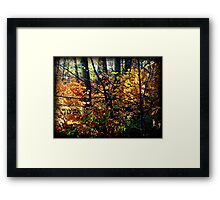 I love the crisp autumn air.  Framed Print