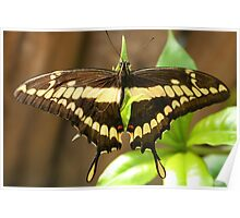 Brown and Yellow Butterfly Poster