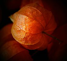 Chinese Lanterns by edesigns14