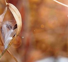 Seed Pod With Lens Flare by Linda  Makiej