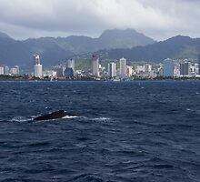 Whale Watching in Honolulu, Hawaii by Georgia Mizuleva