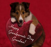 Grandparents Day Grandma Sheltie by jkartlife