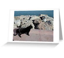 Gato beach Greeting Card