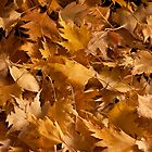 Golden Birch Leaves  by Sandra Foster
