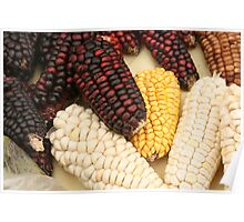 Black Red Yellow and White Corn Poster