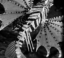 Dancing Lionfish by Kenji Ashman
