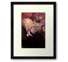 Aerial White-eyed Moray Framed Print