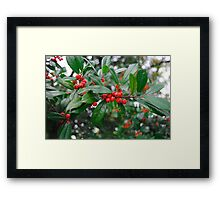 Beautiful Holly Tree with Berries Framed Print