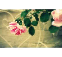 Pink Roses in Walled Garden Photographic Print