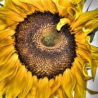 Sunflower Summer's End... by Poete100