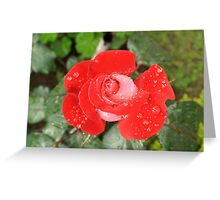 Rose With Water Droplets Greeting Card