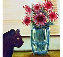 pincushions and gypsy cat Photographic Print