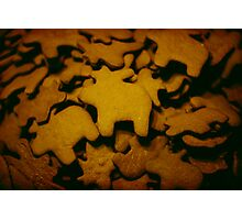 gingerbread Photographic Print