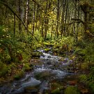 And There Was Peace ~ Brice Creek ~ by Charles & Patricia   Harkins ~ Picture Oregon