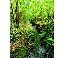 Woodland Stream Photographic Print