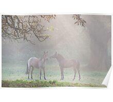 Autumn paddock Poster