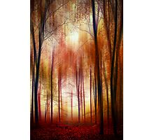 In the red forest Photographic Print