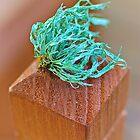 Delicate Lichen by Cee Neuner