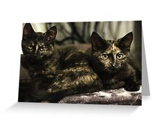 Nebula & Soli the tortie cats #1 Greeting Card