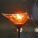 Sunbird by Bob Hardy