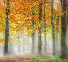 Autumn Woodland in the Mist by Ian Hufton
