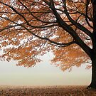 Autumn Fog by elasita