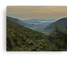 Langdale Morning Light Canvas Print