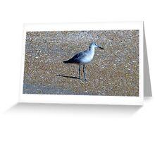 Sandy Bird Artistic Photograph by Shannon Sears Greeting Card