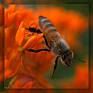 Honey Bee in Orange by Betsy  Seeton
