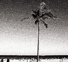 Fort Lauderdale Palm Tree by Phil Perkins