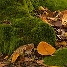 Autumn Leaves  by DIANE  FIFIELD