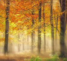 Autumn Gold by Ian Hufton