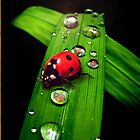 Lady Bug  by Cliff Vestergaard