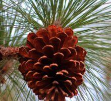Hanging  Pine Cone Sticker