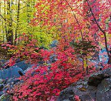 Autumn Rainbow by BGSPhoto