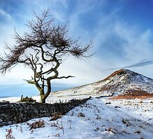 Winter at Roseberry Topping, North Yorkshire by MartinWilliams