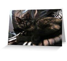 Nebula the tortie cat #2 Greeting Card
