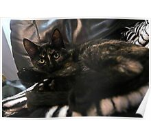 Nebula the tortie cat #2 Poster