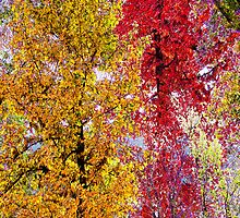 Most Colorful Season of Life by Terri Chandler