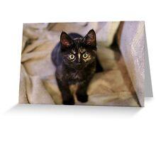 Nebula the tortie cat #3  Greeting Card
