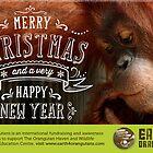 Earth 4 Orangutans Christmas Card - 2 by Raw Wildlife Encounters