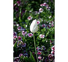 White Solo Photographic Print